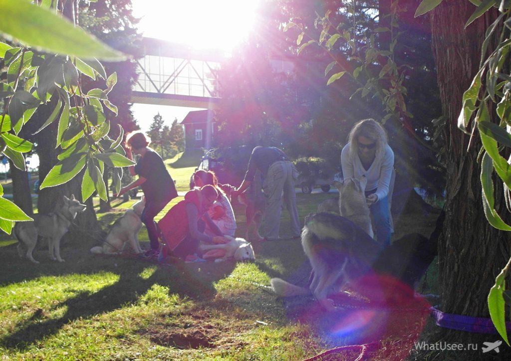 Хаски и лайки в Финляндии