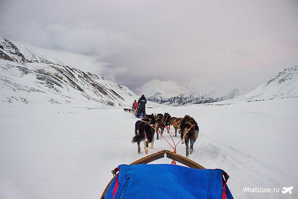 Катание на собачьих упряжках на Шпицбергене