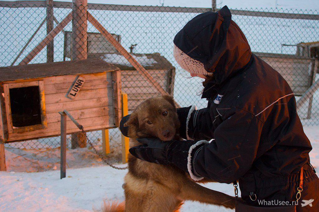 Поездка на собачью ферму на Шпицбергене