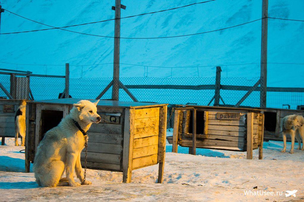 Поездка на собачью ферму