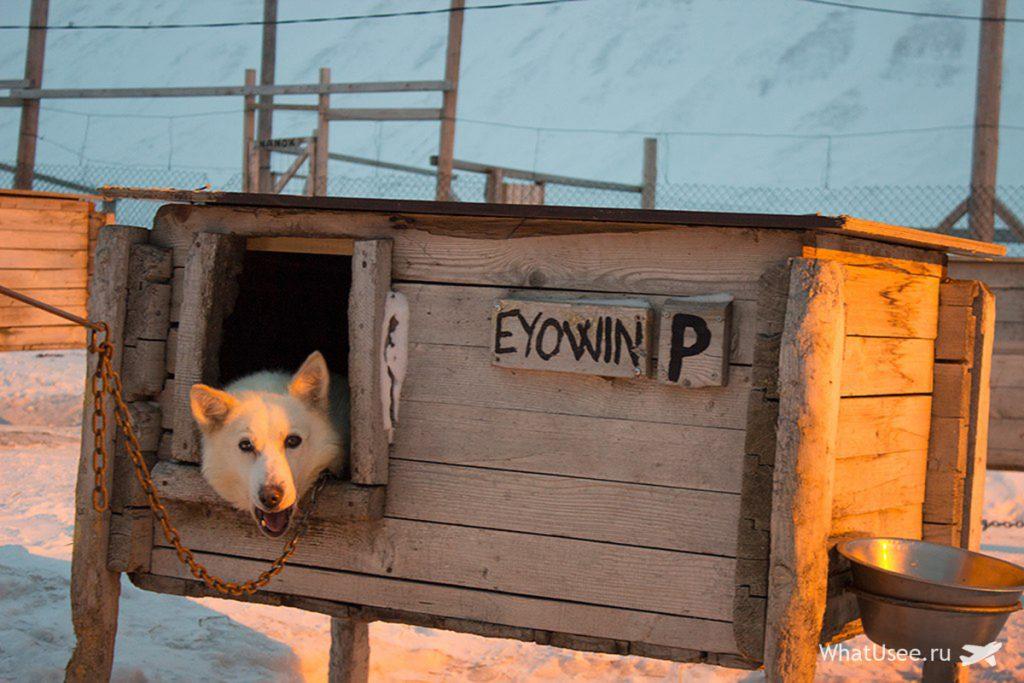 Собачья ферма на Шпицбергене