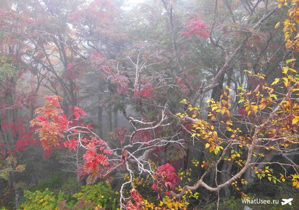 Подъём на гору Фудзи