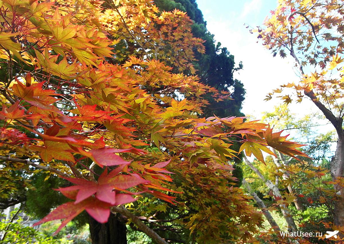 Японский сад у рёкана