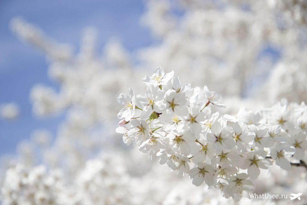 Центральный парк Нью-Йорка весной
