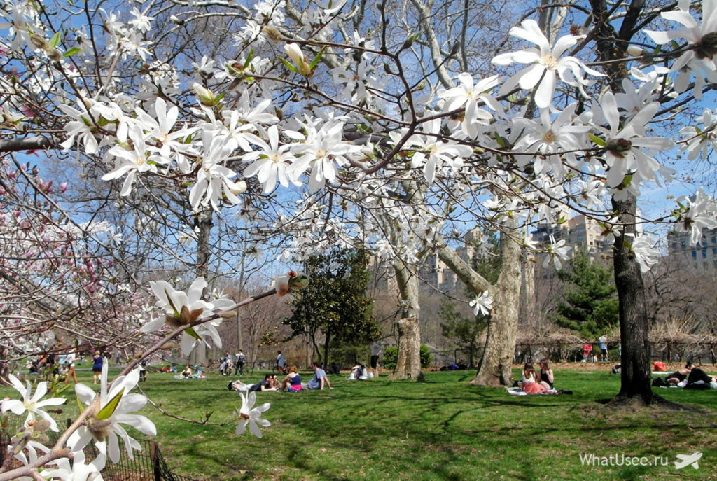 Сентрал Парк в апреле