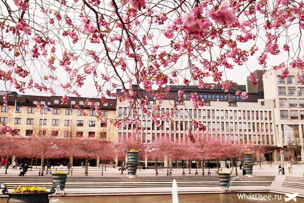 Kungsträdgården в Стокгольме