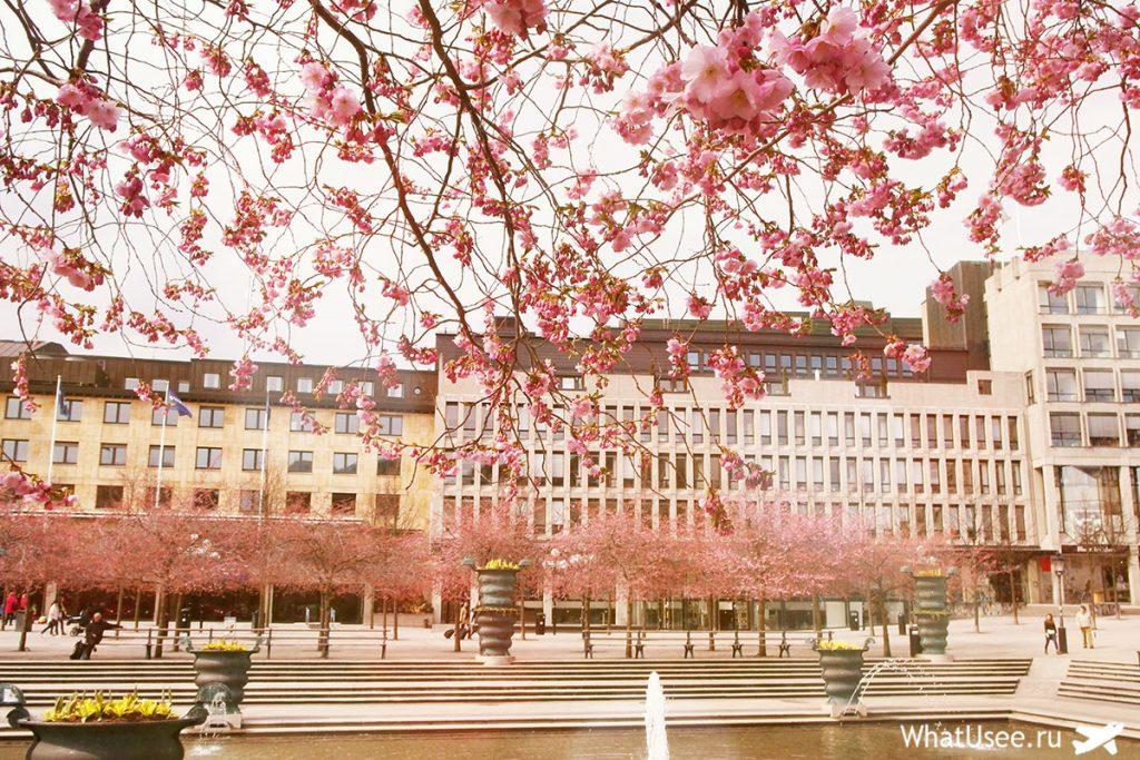 Поездка в Стокгольм весной
