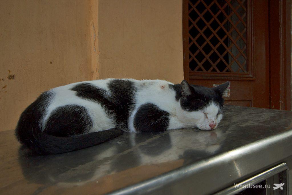 Кошки в Афинах