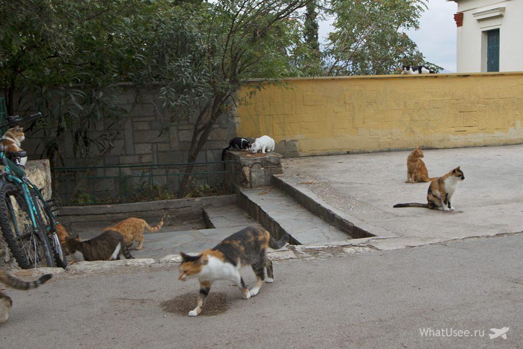 Афинские кошки