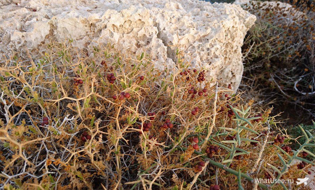 Национальный парк Каво Греко на Кипре