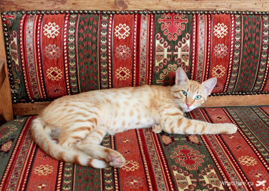 Коты Северного Кипра