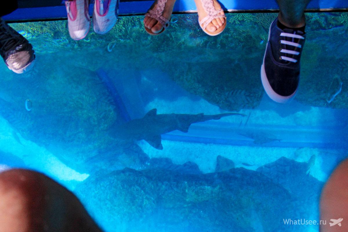 Чем заняться в океанариуме в Дубай Молле