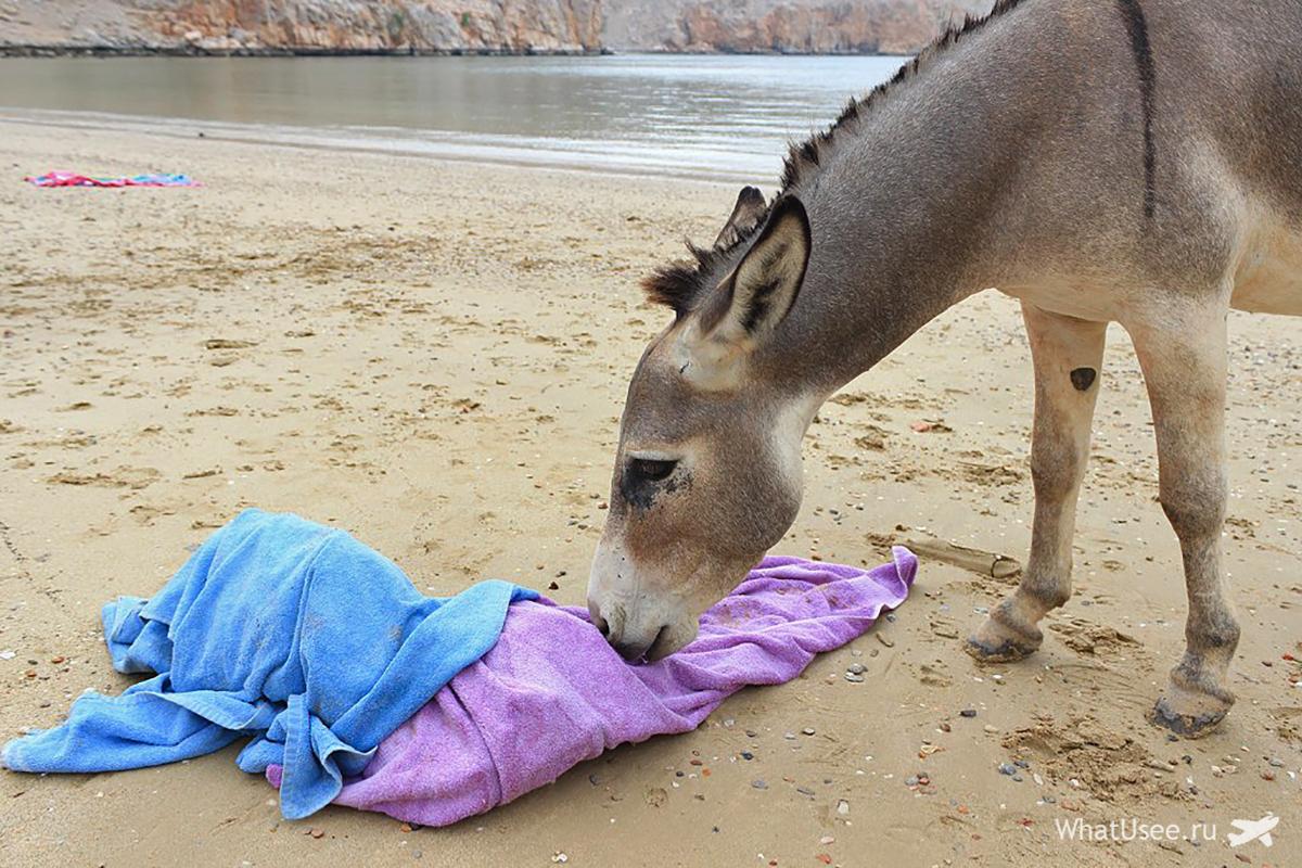 Пляж в Омане