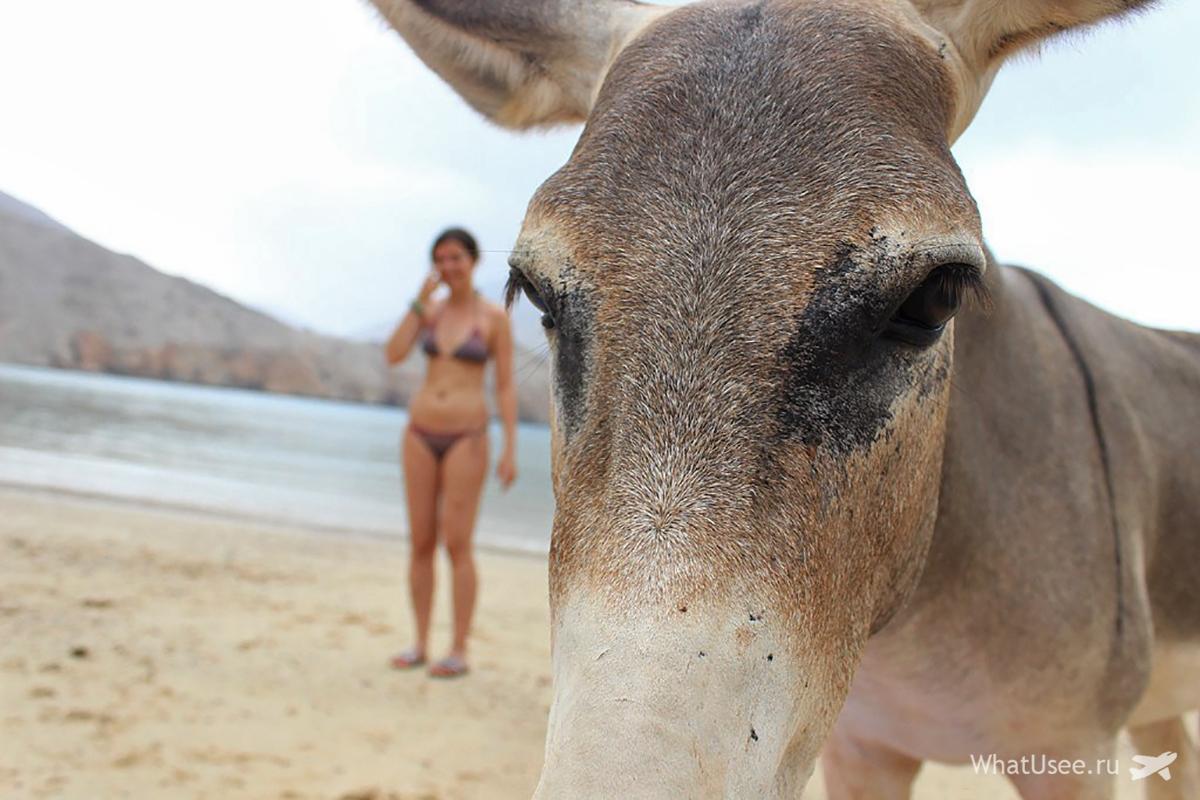 Экскурсия в Оман из ОАЭ