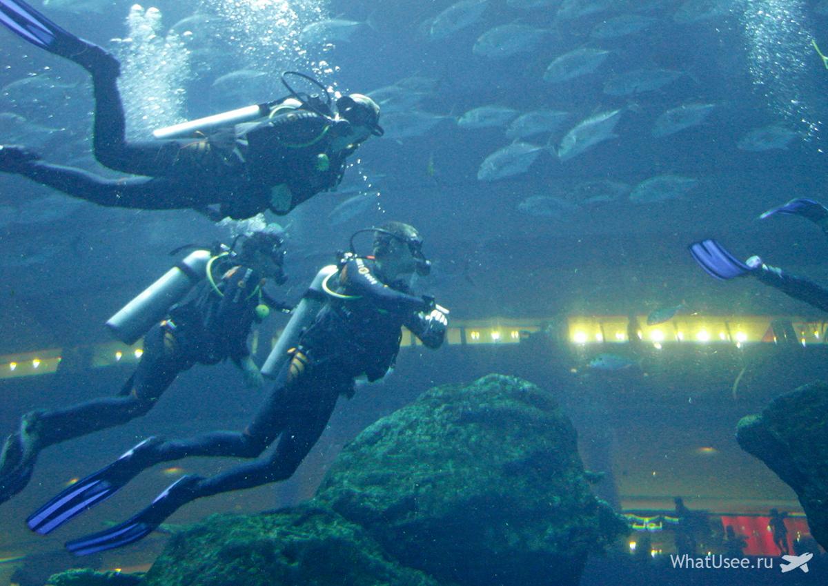Аквариум и океанариум в торговом центре Дубай Молл