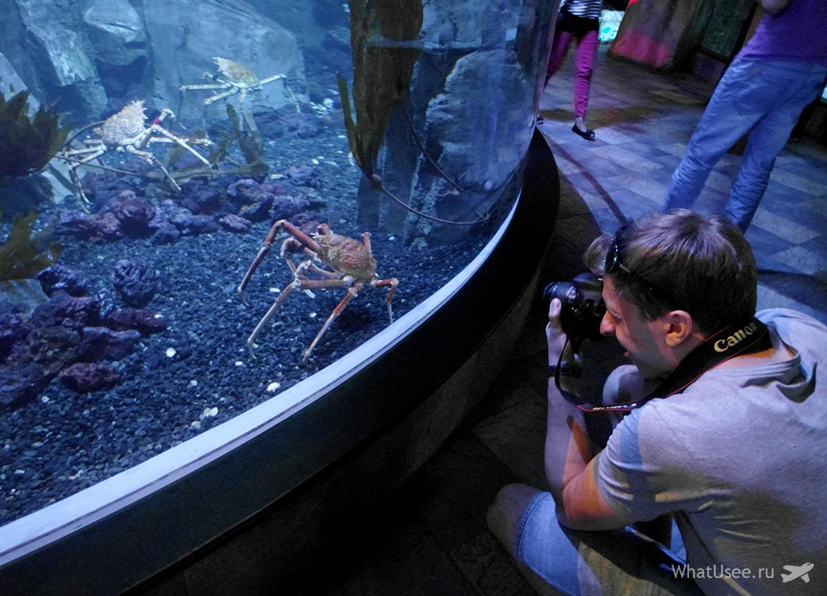 Океанариум в Дубай Молле