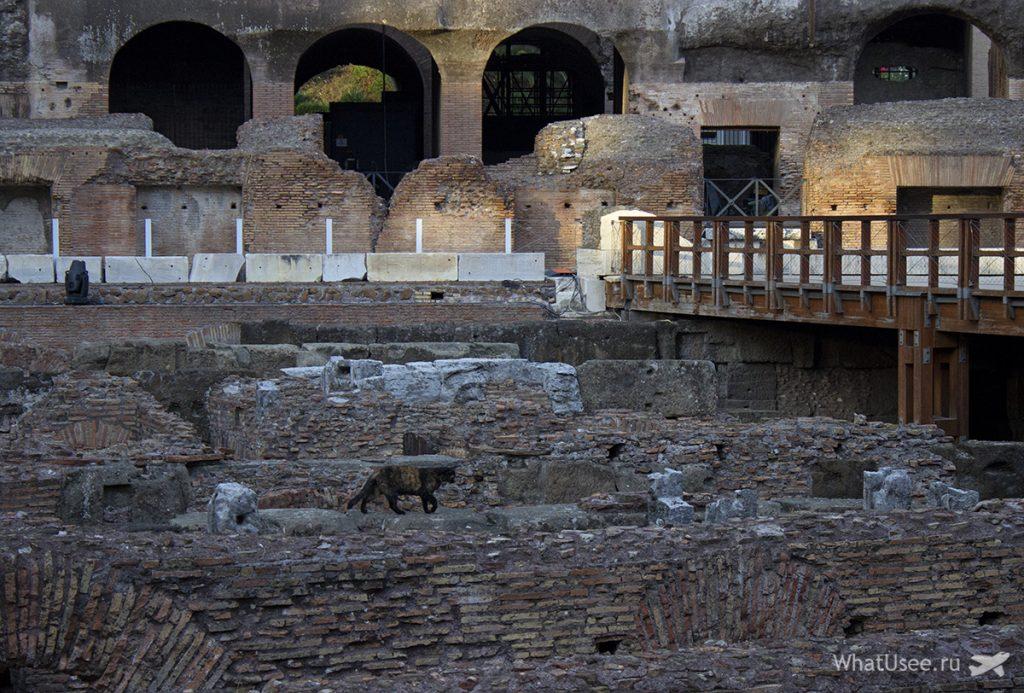 Прогулка по Колизею