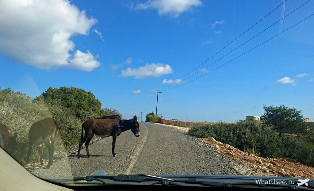 Дикие ослы на Северном Кипре