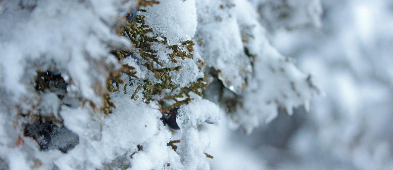 Снег в Троодосе зимой