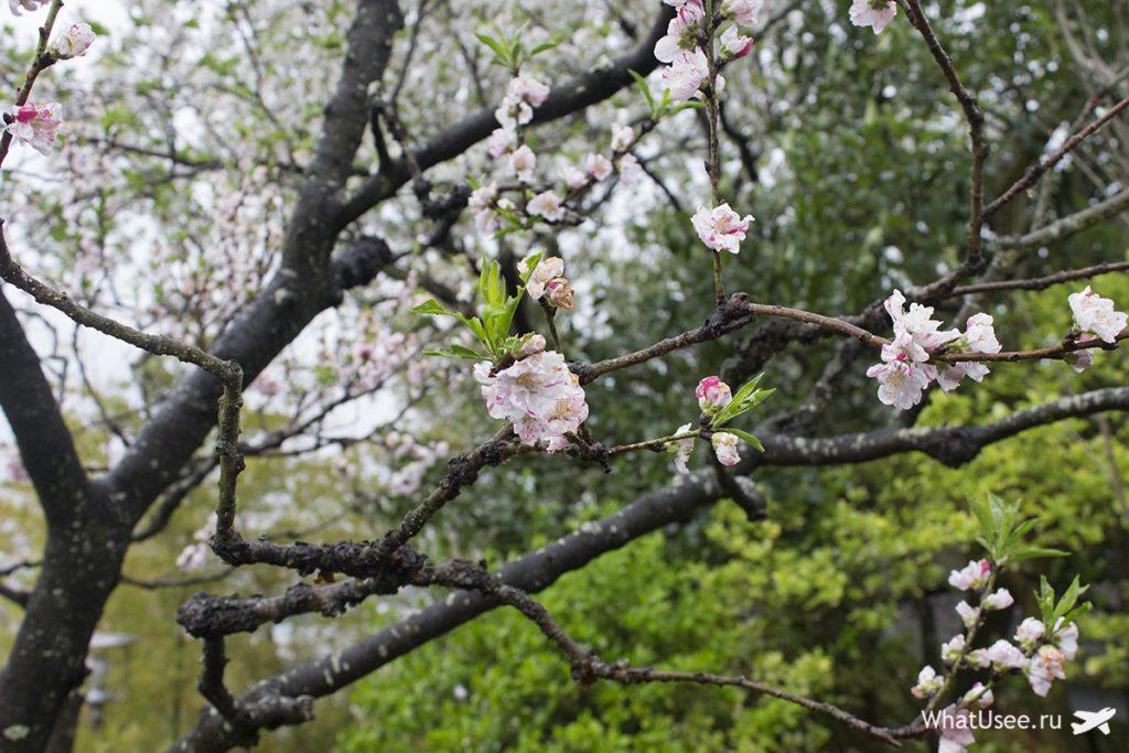 Поездка в Камакуру из Токио