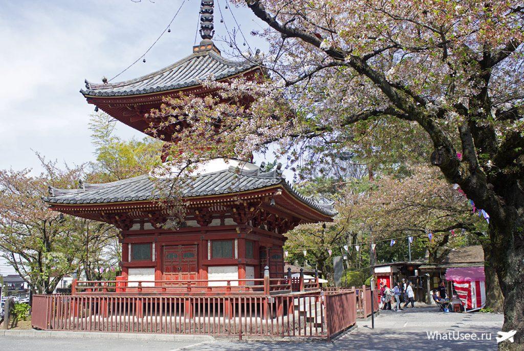 Цветущая сакура в Кавагоэ