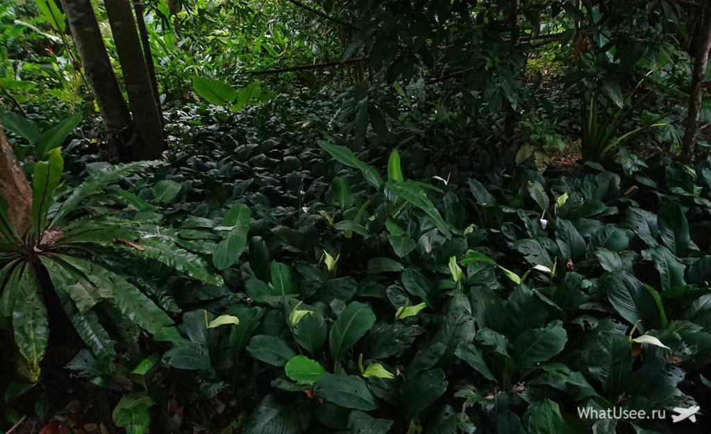 Цветы в национальном парке Као Сок