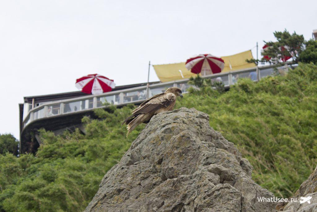 Скалы острова Эносима в Японии