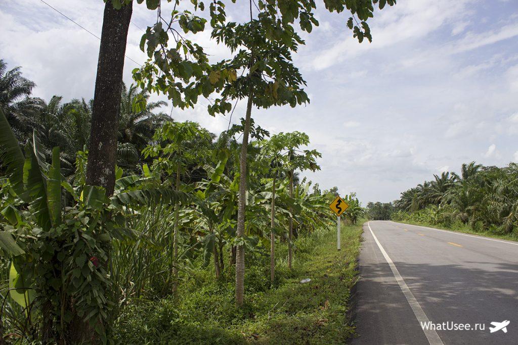 Национальный парк Као Сок в Таиланде