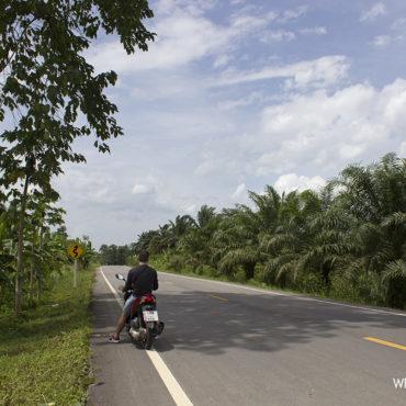 Таиланд: Као Сок. Ночь в джунглях
