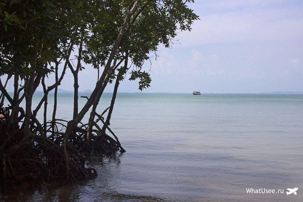 Мангровые деревья на полуострове Рейли