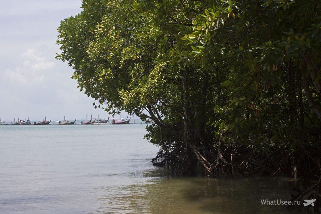 Мангровые деервья на полуострове Рейли в Краби