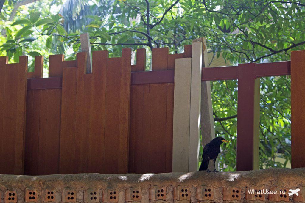 Птицы на полуострове Рейли