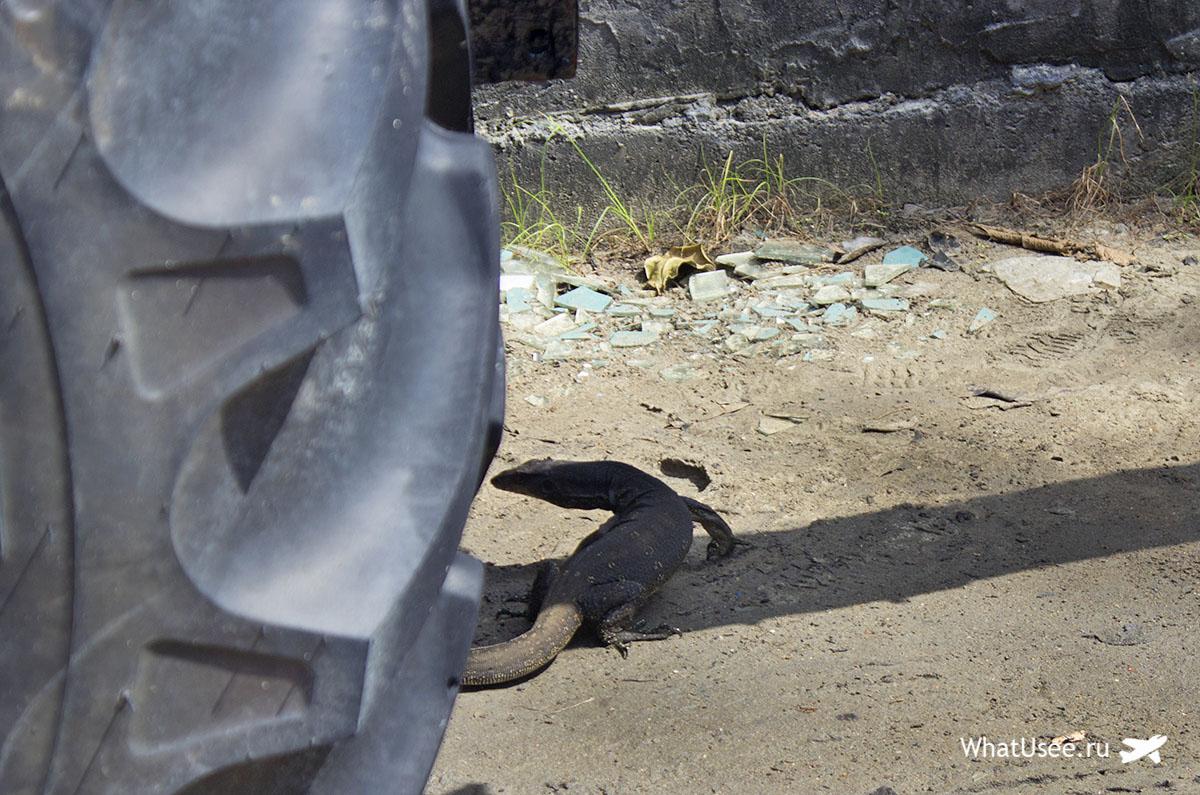 Ящерицы на Восточном Рейли