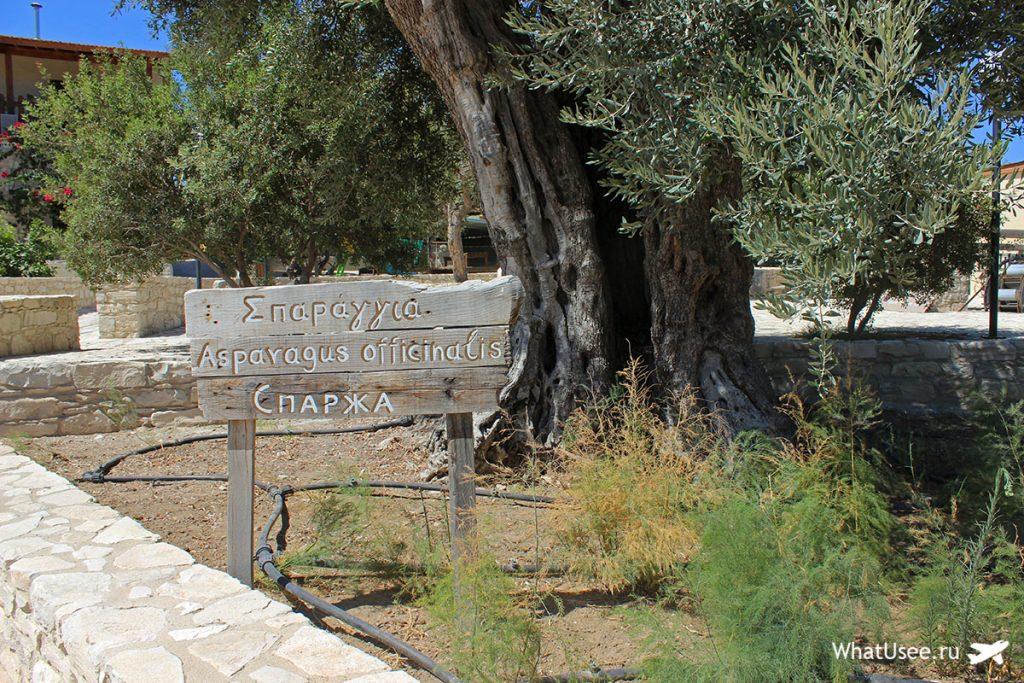 Ослиная ферма в Скарину
