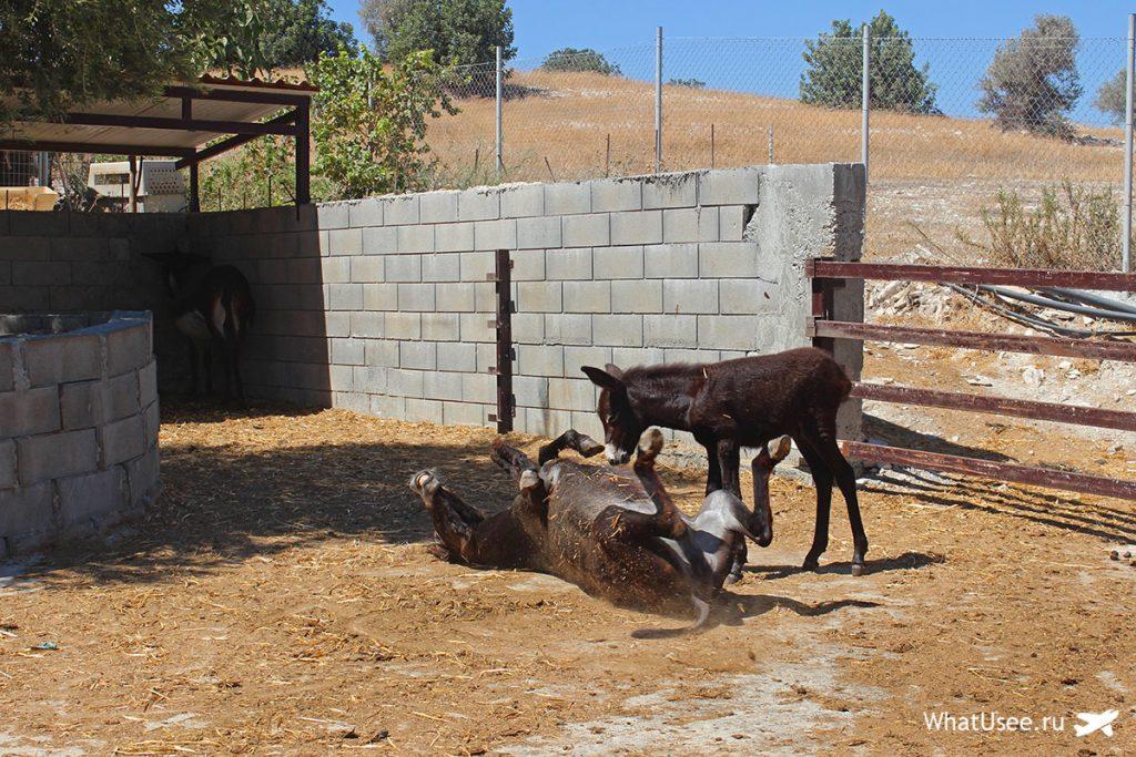Ослиная ферма Кипр