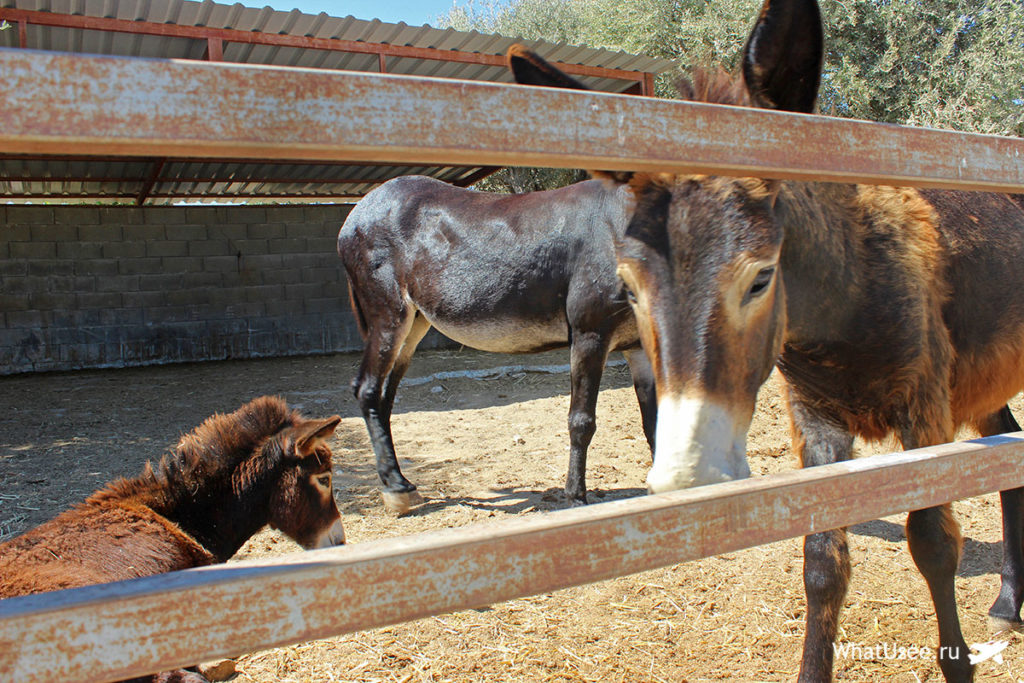 Ослики на ферме на Кипре