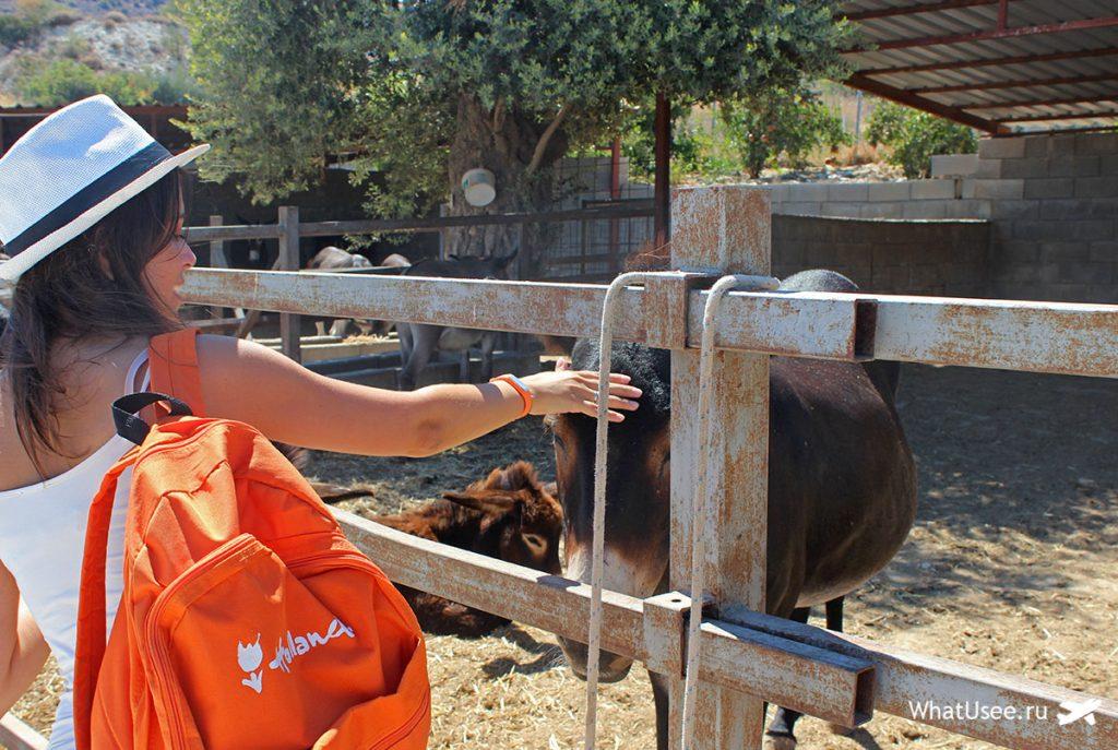 Ослиная ферма на Кипре