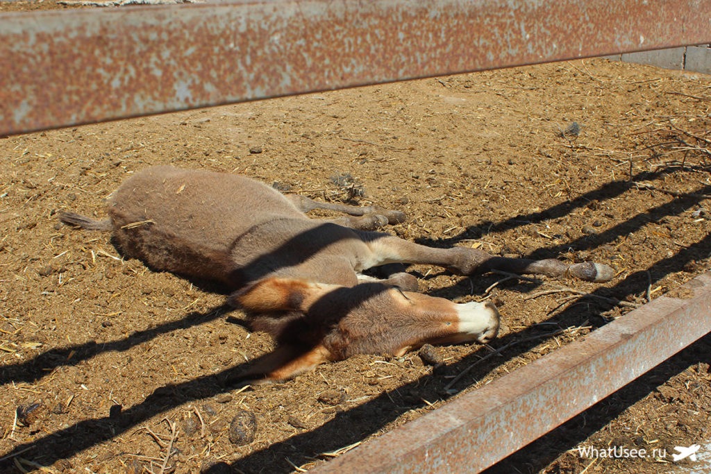 Поездка на ослиную ферму Кипр