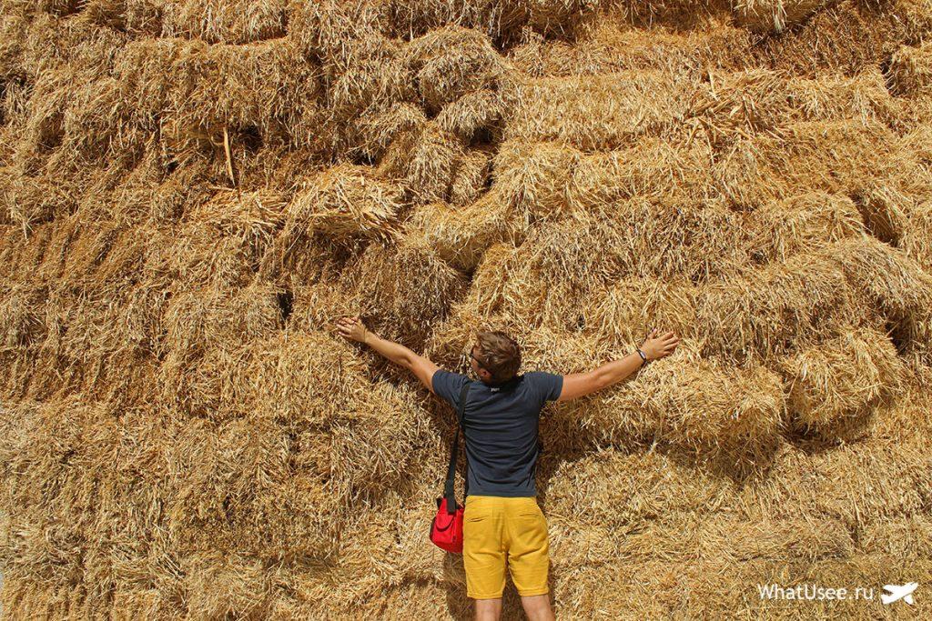 Поездка на ослиную ферму на Кипре