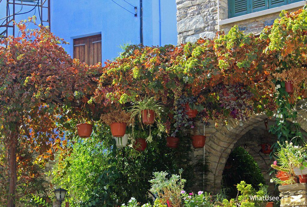 Виноградники в Лефкаре на Кипре
