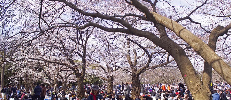 Почему вам не понравится в Японии