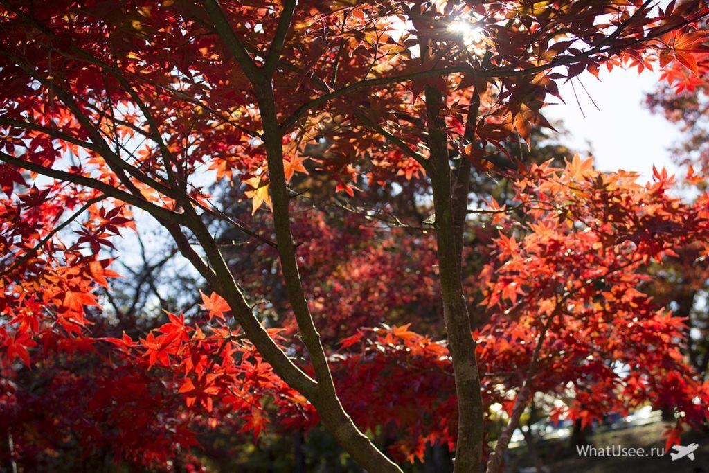 Момидзи в Японии в ноябре
