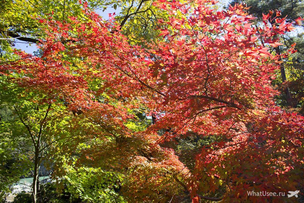 Парк момидзи в Нагаторо
