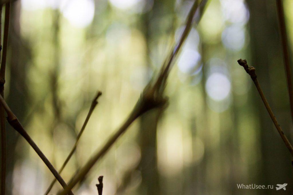Бамбуковый лес в Арасияме в Киото