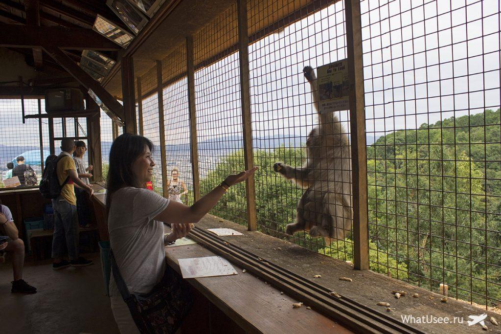 Гора с обезьянами в Арасияме