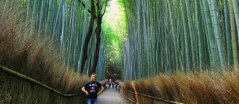 Бамбуковая роща Арасияма в Японии