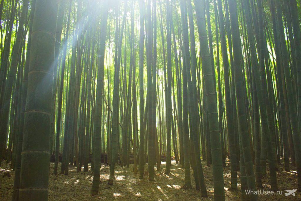 Бамбуковая роща в Арасияме