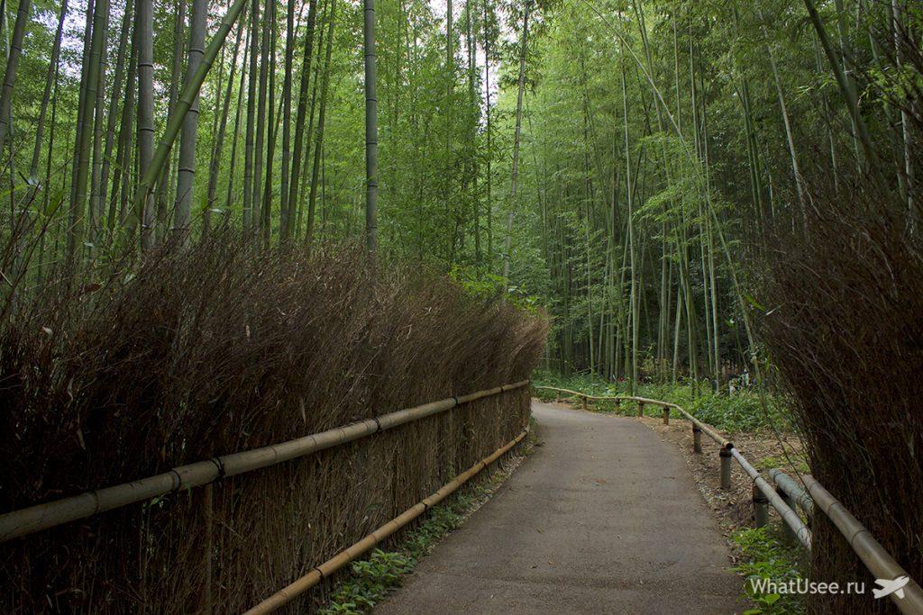 Бамбуковый лес Арасияма в Японии