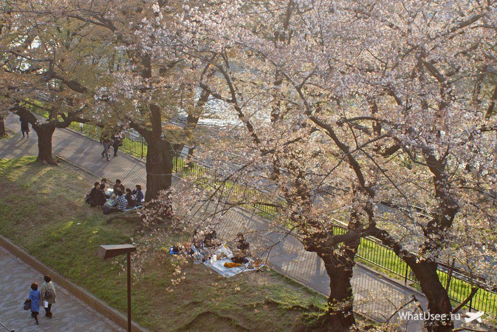 Праздник любования сакурой а Токио 2019