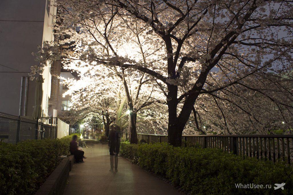 Где смотреть сакуру в Токио